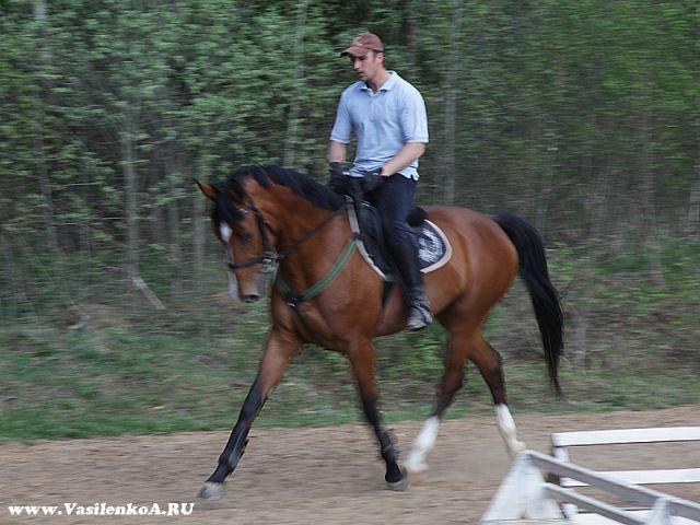 Поздравление для тренера конного спорта 79