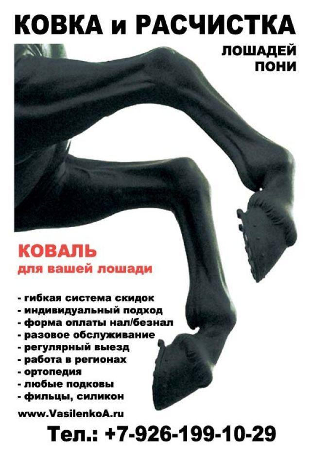 инструкция по сапу лошадей - фото 10